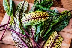Fresh Sorrel Leaves closeup view. Organic product Royalty Free Stock Image
