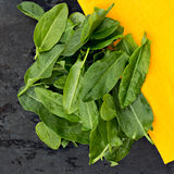 Fresh sorrel leaves. On the old black table Stock Photos
