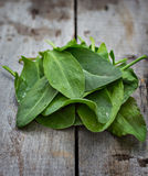 Fresh sorrel. Sorrel leaves  on the old boards Stock Photo