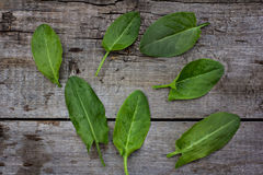 Fresh sorrel. Sorrel leaves  on the old boards Stock Image