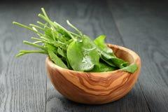 Fresh sorrel leaves in olive bowl on oak wood. Table, rustic food stock photo