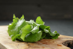 Fresh sorrel leaves in olive bowl on oak wood. Table, rustic food Stock Photography