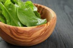 Fresh sorrel leaves in olive bowl on oak wood. Table, rustic food stock image
