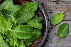 Fresh sorrel on a plate. Fresh sorrel leaves on a plate, the plate is on the old boards Royalty Free Stock Photo