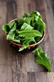 Fresh sorrel. Salad in steel bowl Royalty Free Stock Photo