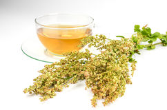 Fresh sorrel and sorrel tea. Glass cup with sorrel tea stock photos