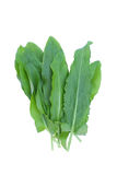 Fresh sorrel on a white background Stock Photos