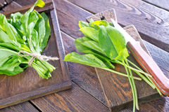 Fresh sorrel. On the wooden board and on a table Royalty Free Stock Photos