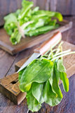 Fresh sorrel. On the wooden board and on a table stock photo