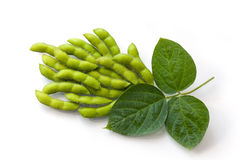 Fresh Soy Beans Stock Image