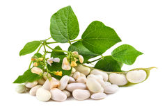 Fresh soy beans Stock Photo