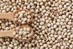 fresh soybean in wooden spoon. Stock Photos