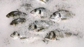 Fresh sparus fish on ice top view. many fish on ice selling concept stock photo