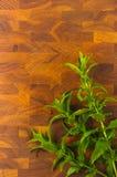 Fresh spearmint herb Royalty Free Stock Photos