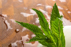 Fresh spearmint herb in the mortar Royalty Free Stock Photo