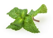 Fresh spearmint leaves isolated on white stock photos