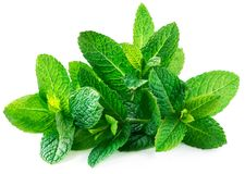 Fresh spearmint leaves isolated on the white background. Mint, p. Eppermint close up royalty free stock photo