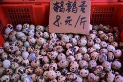 Fresh speckled quail eggs. Heaped up inside the  plastic basket. Translation: `quail eggs 8 yuan/half a kilo Royalty Free Stock Photography