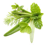 Fresh spices and herbs isolated Royalty Free Stock Image