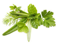 Fresh spices and herbs isolated Stock Image
