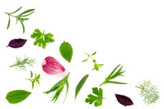 Fresh spices and herbs isolated on white background. Dill parsle. Y basil thyme tarhun garlic. Top view Royalty Free Stock Photography