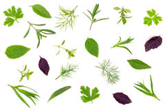 Fresh spices and herbs isolated on white background. Dill parsley basil thyme tarragon. Top view Stock Photography