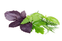Fresh spices and herbs on white background Royalty Free Stock Photography