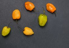 Fresh spicy habanero peppers of different colors on the black stone background royalty free stock photos