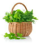 Fresh spicy herbs in basket Royalty Free Stock Images