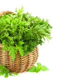 Fresh Spicy Herbs in Basket /  on white Stock Photography