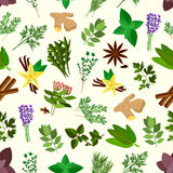Fresh spicy herbs and condiments seamless pattern. Background with parsley, mint and rosemary, basil, dill and anise, thyme, oregano and cinnamon, ginger, bay Stock Photo