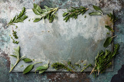 Fresh spicy herbs on slate background Stock Photos