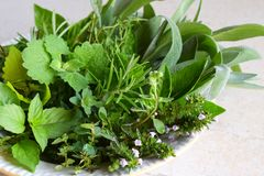 Fresh spicy and medicinal herbs on white background. Bouquet from various herb - rosemary, oregano, sage, marjoram, basil, thyme,. Mint stock photos