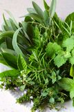 Fresh spicy and medicinal herbs on white background. Bouquet from various herb - rosemary, oregano, sage, marjoram, basil, thyme,. Mint royalty free stock image