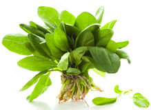 Fresh spinach Stock Photo