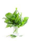 Fresh spinach royalty free stock photos