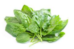 Free Fresh Spinach Royalty Free Stock Photography - 20486607