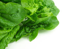Fresh spinach Royalty Free Stock Photography