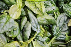 Fresh spinach background royalty free stock photo