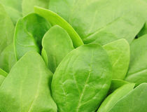 Fresh spinach,background royalty free stock photos
