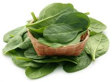 Fresh Spinach. In basket over white background Stock Photos