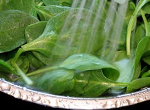 Fresh Spinach Being Washed Royalty Free Stock Photos
