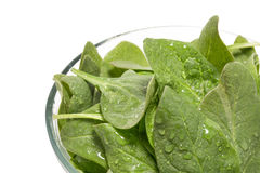 Fresh  spinach in a bowl Royalty Free Stock Image