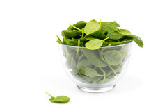 Fresh spinach in a bowl Royalty Free Stock Photos