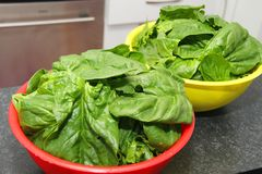 Fresh spinach in a bowl Stock Images