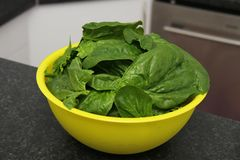 Fresh spinach in a bowl Royalty Free Stock Images