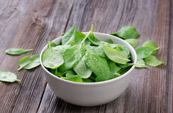 Fresh spinach in bowl Stock Photography