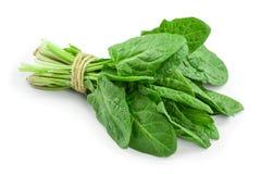 Fresh spinach bundle isolated on white background.  stock photos