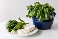 Fresh spinach Royalty Free Stock Photo