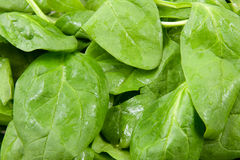 Fresh spinach in closeup Royalty Free Stock Images